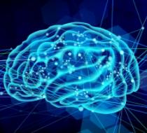脳のイメージ画像