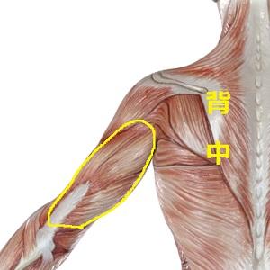 腕の裏の筋肉(上腕三頭筋=トライセプス)