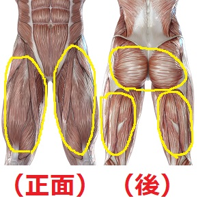下半身の筋肉