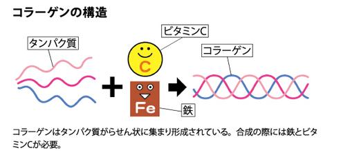 コラーゲン合成にはビタミンCと鉄が必要